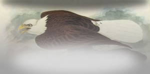 02_Audubon_2