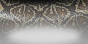 06_Snake_2